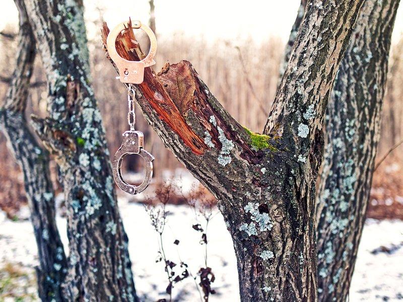 Steel Handcuffs on Tree.